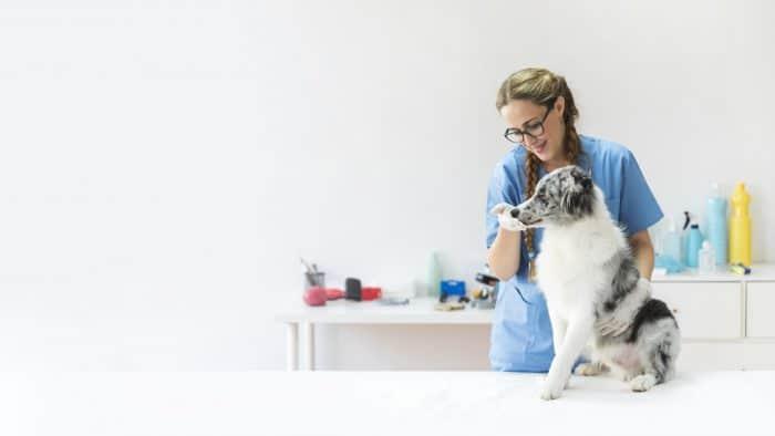 獣医師が転職する際に失敗しない3つのポイント