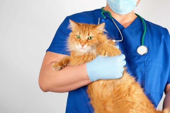 獣医師の4つの転職先のメリット・デメリット
